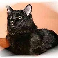 Adopt A Pet :: Boomer - Montgomery, IL