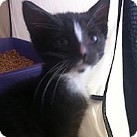 Adopt A Pet :: Mikey - Long Beach, NY