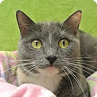 Adopt A Pet :: Genevieve - Foothill Ranch, CA
