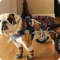 Adopt A Pet :: Stewart - Park Ridge, IL