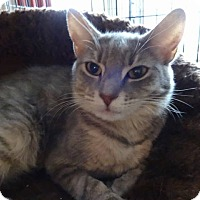 Adopt A Pet :: Angelina - Colmar, PA