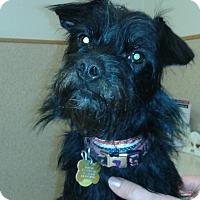 Adopt A Pet :: Mister - Salem, OR