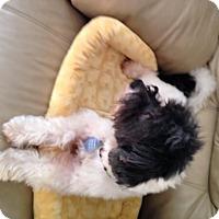 Adopt A Pet :: Titus - Elkhart, IN