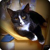 Adopt A Pet :: James Bond-Adopt Pending - Richmond Hill, ON