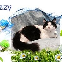 Adopt A Pet :: Jezzy - Harrisburg, NC