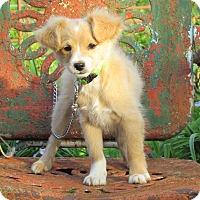 Adopt A Pet :: BUFFY - Bedminster, NJ