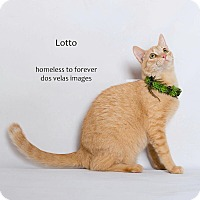 Adopt A Pet :: Lotto - Arcadia, CA