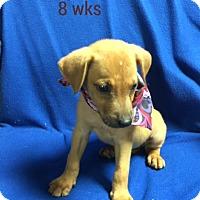 Adopt A Pet :: Charley - Buffalo, NY