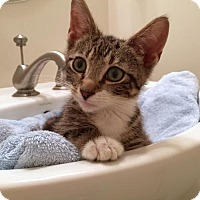 Adopt A Pet :: Milo - Philadelphia, PA
