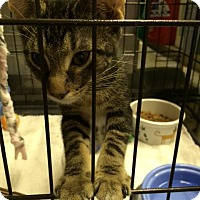 Adopt A Pet :: Turner - Byron Center, MI