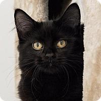 Adopt A Pet :: Jett - St. Paul, MN