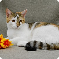 Adopt A Pet :: Callie - Richmond, VA