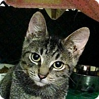 Adopt A Pet :: Ben - East Brunswick, NJ