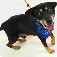 Adopt A Pet :: HORRACE - Sanford, FL