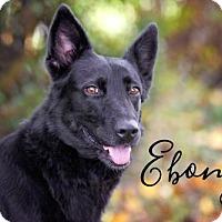 Adopt A Pet :: Ebony - Joliet, IL