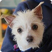 Adopt A Pet :: MISSY - Beverly Hills, CA