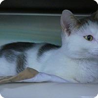 Adopt A Pet :: Snowflake - Wyandotte, MI