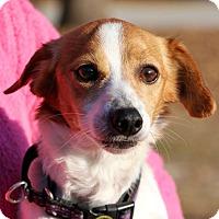 Adopt A Pet :: Buster - Plainfield, CT