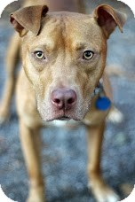 Terrier (Unknown Type, Medium) Mix Dog for adoption in Tinton Falls, New Jersey - Gomez