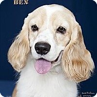 Adopt A Pet :: Ben - Rancho Mirage, CA