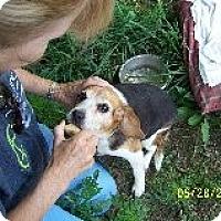 Adopt A Pet :: Lucinda Needs a New Life! - Quentin, PA