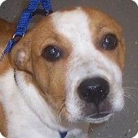 Adopt A Pet :: Truman - Georgetown, KY