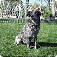 Adopt A Pet :: Hanna-ADOPTION PENDING - Phoenix, AZ