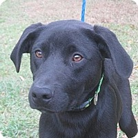 Adopt A Pet :: Mack - Kingwood, TX