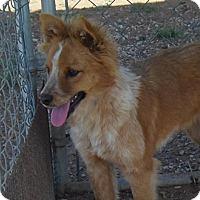 Adopt A Pet :: Wendy - Post, TX