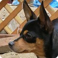 Adopt A Pet :: Zena - Oceanside, CA