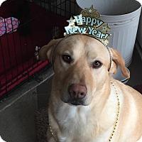 Adopt A Pet :: Lucas-Courtesy Post - Burleson, TX