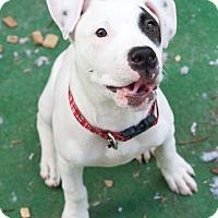 Adopt A Pet :: Pupeye - West Allis, WI