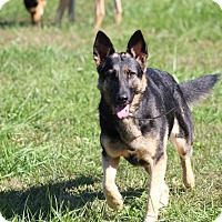 Adopt A Pet :: Kira - Greeneville, TN