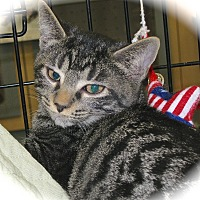 Adopt A Pet :: Smoochie - Fort Wayne, IN