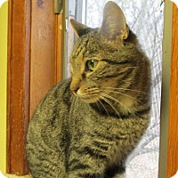 Adopt A Pet :: CASINOVA - Acme, PA