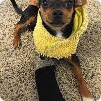 Adopt A Pet :: Chaco - San Diego, CA