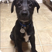 Adopt A Pet :: Zeus - Homewood, AL