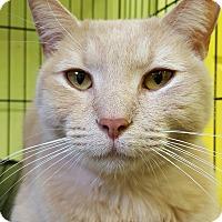 Adopt A Pet :: Niko - Trevose, PA