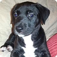 Adopt A Pet :: Joey - Cincinnati, OH