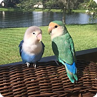 Adopt A Pet :: Peaches and Blueberry - Tampa, FL