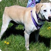 Adopt A Pet :: ARGOS - Albany, NY