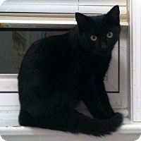 Adopt A Pet :: Panther - Medford, NJ