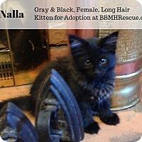 Adopt A Pet :: Nalla - Temecula, CA