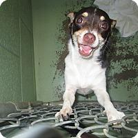 Adopt A Pet :: Mia - Gadsden, AL