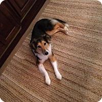 Adopt A Pet :: Tabby - Atlanta, GA