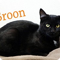 Adopt A Pet :: Broon - Hamilton, MT