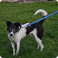 Border Collie Mix Dog for adoption in Akron, Ohio - Terri