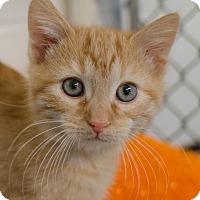 Adopt A Pet :: Sammy - Greenwood, SC