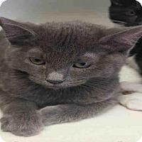 Adopt A Pet :: SMOKEY - Bakersfield, CA