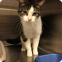 Adopt A Pet :: Ciku - THORNHILL, ON